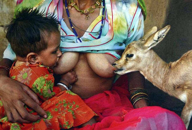 Breastfeeding patterns in the Arabian Gulf countries. - NCBI